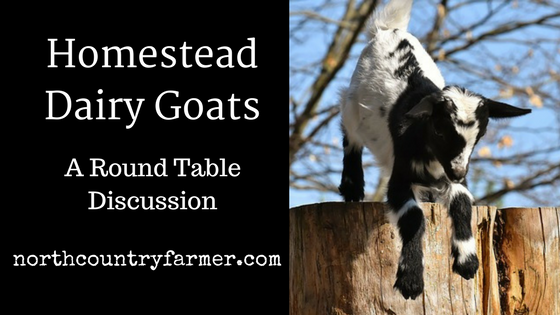 Homestead Dairy Goats