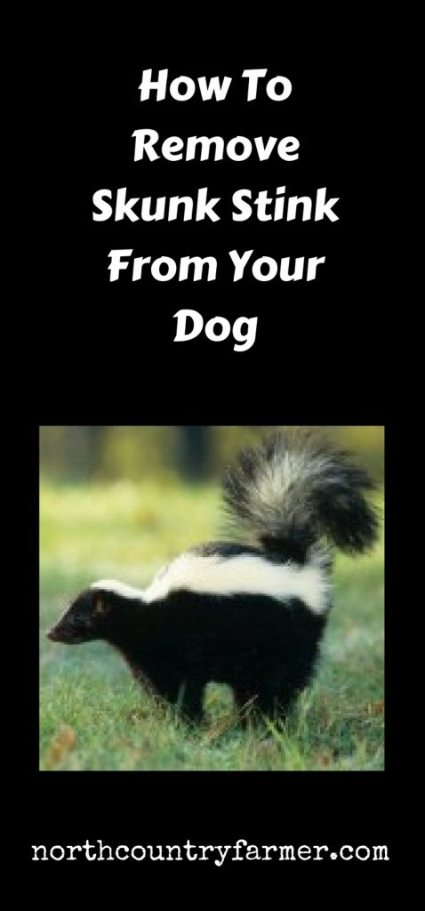 How To Remove Skunk Stink From Your Dog