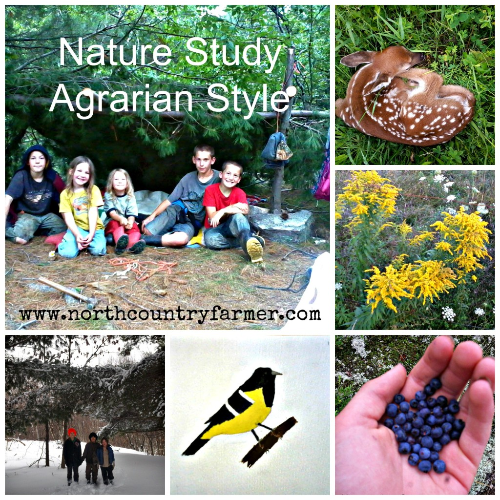 Nature Study...Agrarian Style -