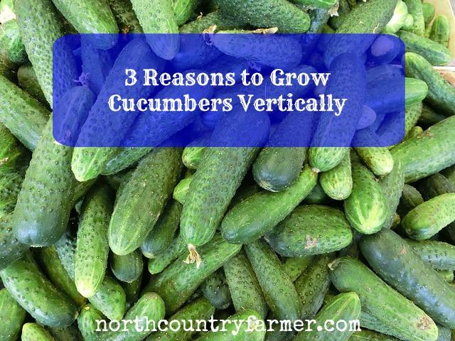 nice how to grow cucumber Part - 6: nice how to grow cucumber amazing design