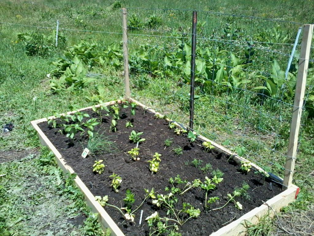 Why We Use Raised Beds
