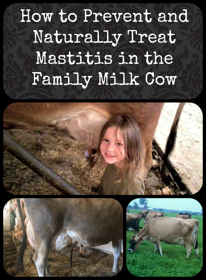 How to Prevent and Naturally Treat Mastitis in the Family Milk Cow
