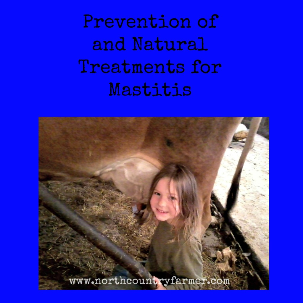 Prevention of and Natural Treatments for Mastitis