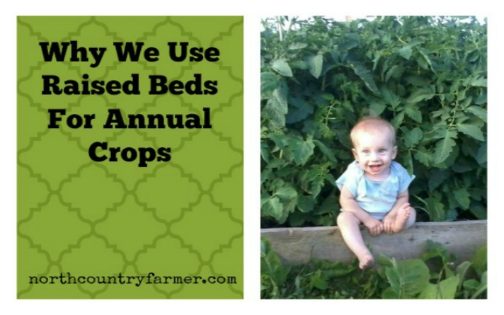 Why We Use Raised Beds For Our Annual Crops