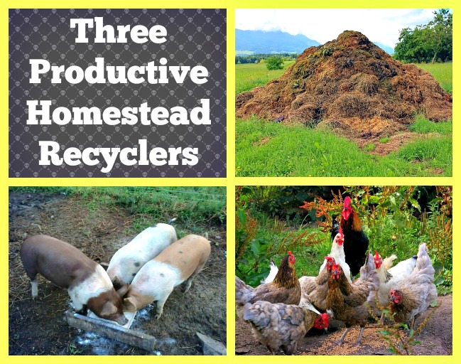 3 Productive Homestead Recyclers