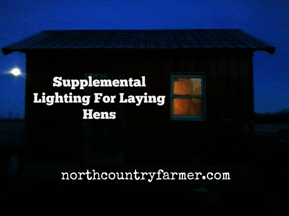 Supplemental Lighting For Laying Hens