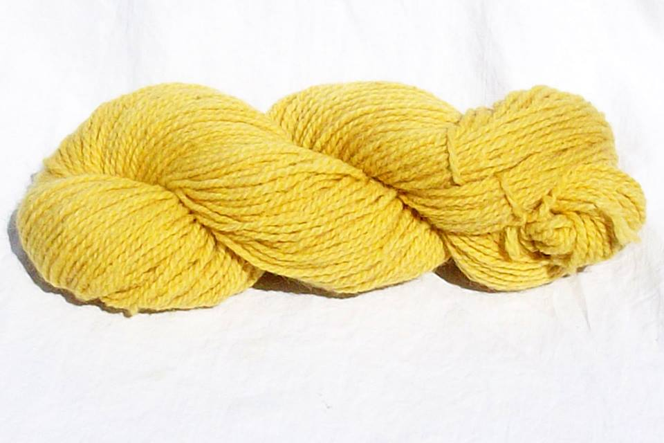 Yarn Dyed With Goldenrod