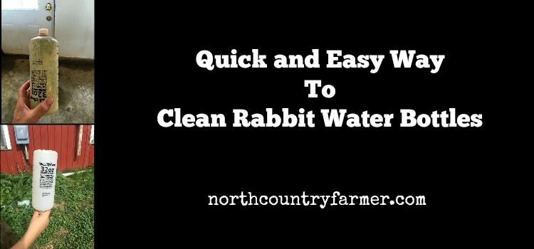 Quick and Easy Way to Clean Rabbit Water Bottles