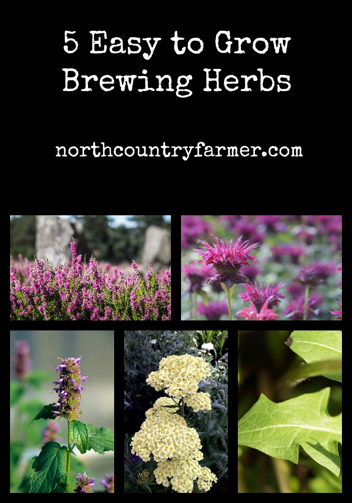 5 Easy To Grow Brewing Herbs