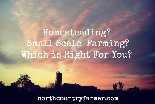 Homesteading or Small Scale  Farming.  Which is Right For You?