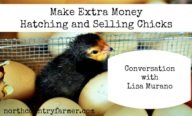 Make Money Hatching and Selling Chicks with Lisa Murano