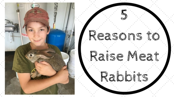 5 Reasons to Raise Meat Rabbits