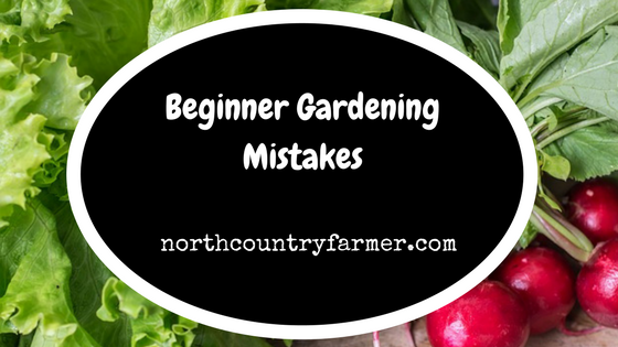Beginner Gardening Mistakes (Podcast)