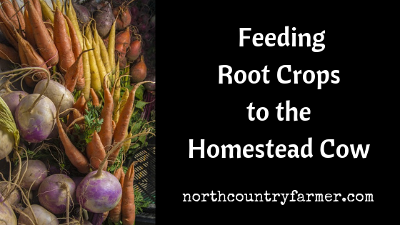The Potential For Feeding Root Crops to the Homestead Cow
