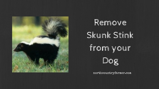 Remove Skunk Stink from your Dog