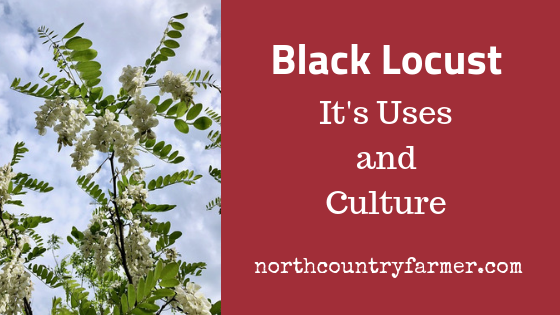 Black Locust ~ homestead uses and culture